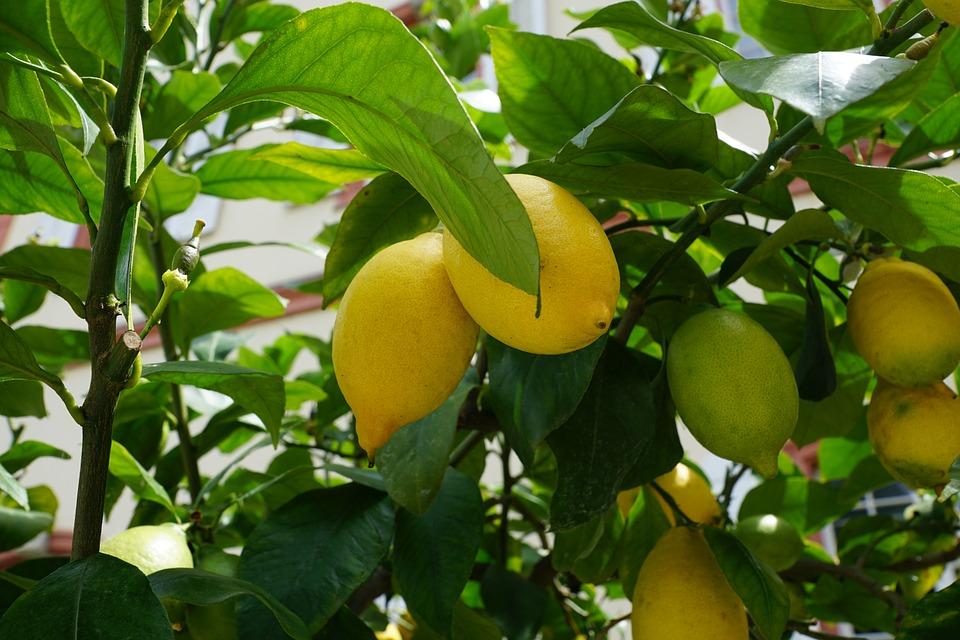 limone lemon