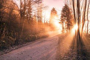 alba bosco